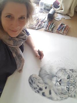 drawing snow leopard