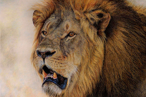 Cecil Print - Signed Limited Edition Print of 100.  80 x 56cm