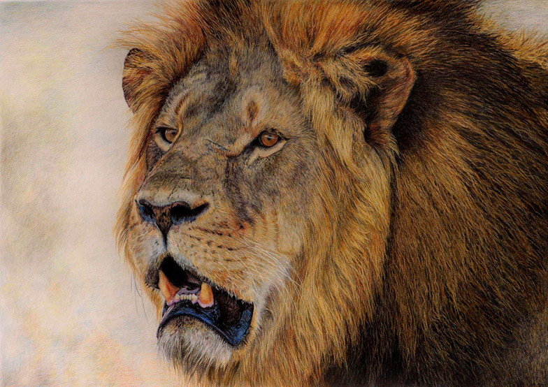 Cecil - Male Lion - SOLD
