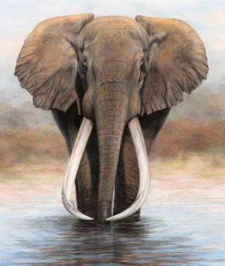 Ahmed - Big Tusker Elephant - SOLD