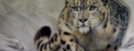 snow leopard web edit best website crop.