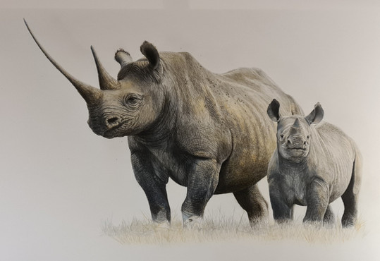 rhino 1.jpg