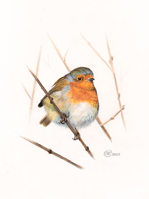 Little Robin Red Breast - Signed Print
