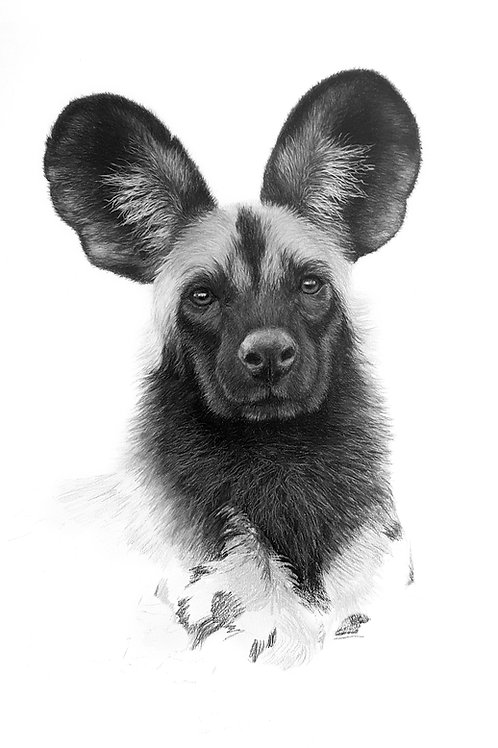 Im All Ears
