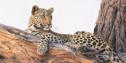 'The Lookout' Large Limited Edition Print of 150  - 92 x 53cm