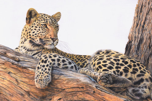 The Lookout - 53 x 92 cm - other sizes available