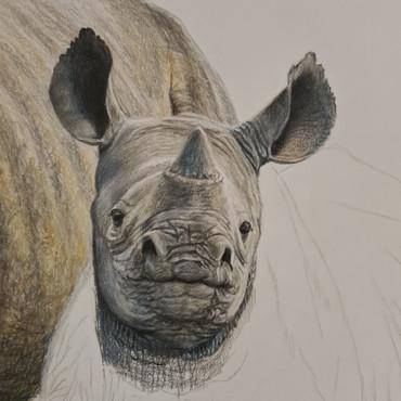 rhino progress 3