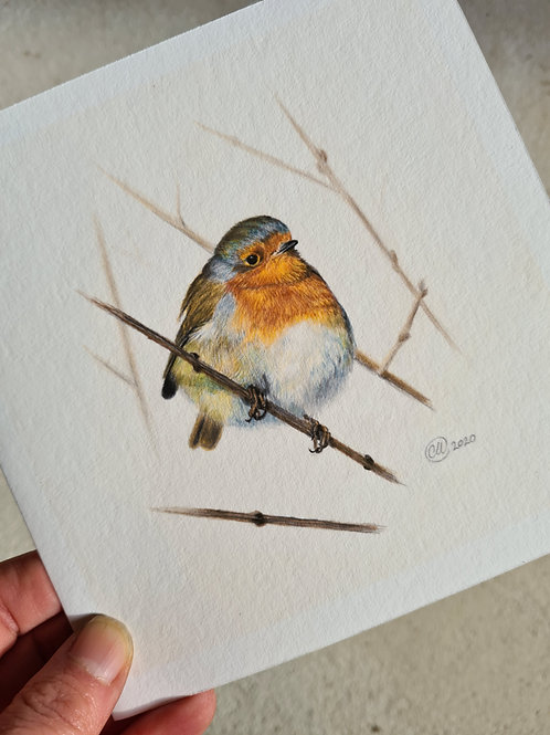 single Little Robin Red Breast Christmas card - pack of 6 & 12 available
