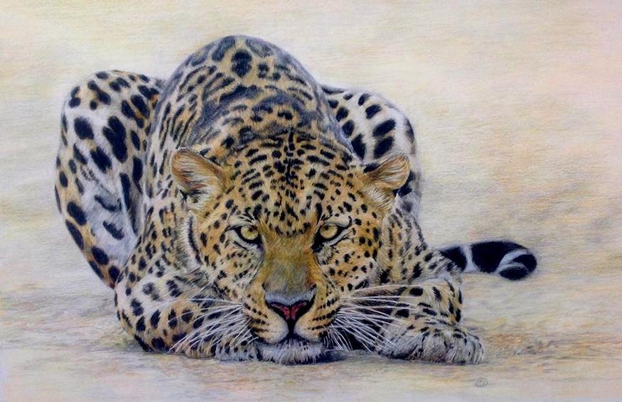 In line of sight - leopard stalking - SOLD