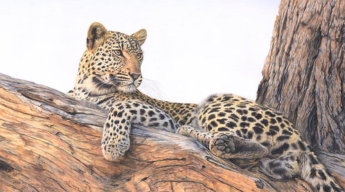 'The Lookout' - small Limited Edition Print of 150.  61 x 35cm unframed