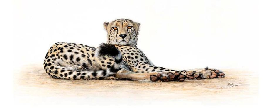 I Dare You - Cheetah