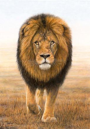 Mufasa 85 x 65 cm
