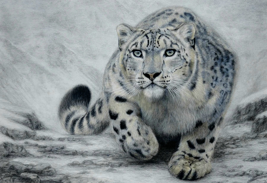 On Silent Paw - snow leopard