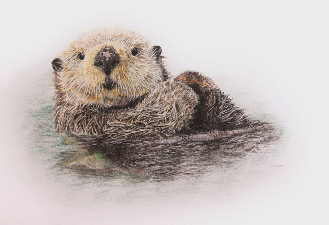 Back float - Sea Otter