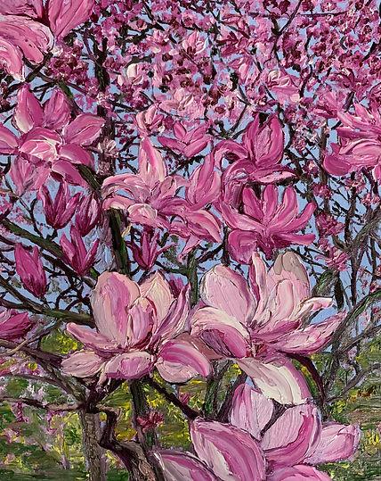 Magnolia Eruption.jpg