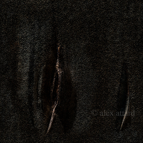 slash_12_x_200px_©_alex_attard_copy.jpg