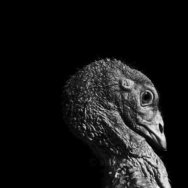 oscar_©_alex_attard.jpg