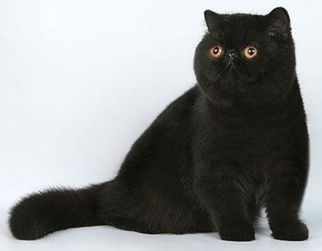 2 black exotic (pinterest).jpg