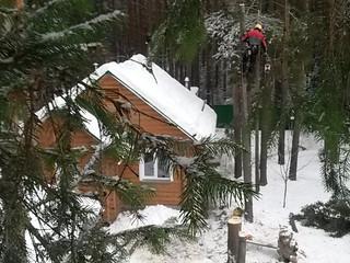 Работаем с деревьями зимой