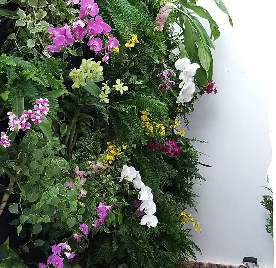 Jardim vertical de orquideas!