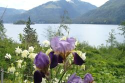Inlet shot through Flowers (5)