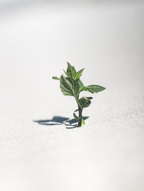 growing leaf.jpg