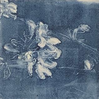 Blossom IV.jpg