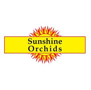 sunshine orchids.png