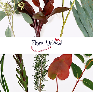 flora united.png