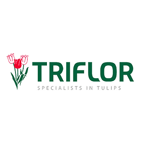 triflor.png