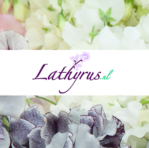 lathyrus_nl.png
