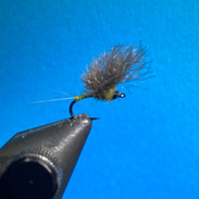 Upwing Mayfly.jpg