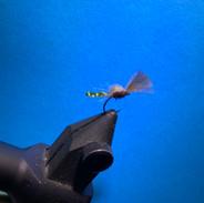 Mayfly hatching.jpg