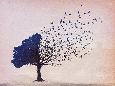 Due cose i figli dovrebbero ricevere dai propri genitori: radici ed ali.