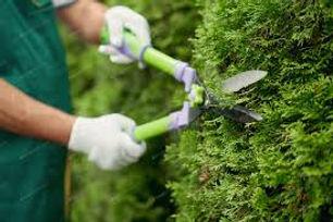 cut shrubs.jpeg