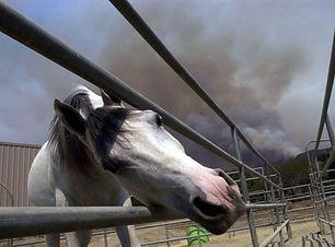 horse fire plan.jpeg