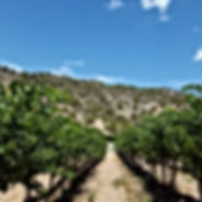 our vines 2018.jpg