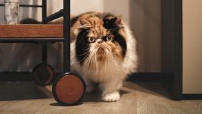 "Simón Luna: ""Mi gusto por los gatos viene de Karl Lagerfeld"""