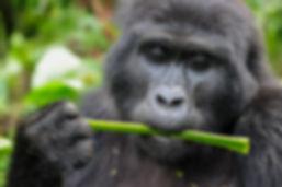 Uganda 442.jpg