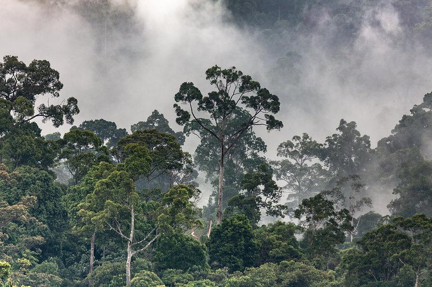 rain forest2.jpg