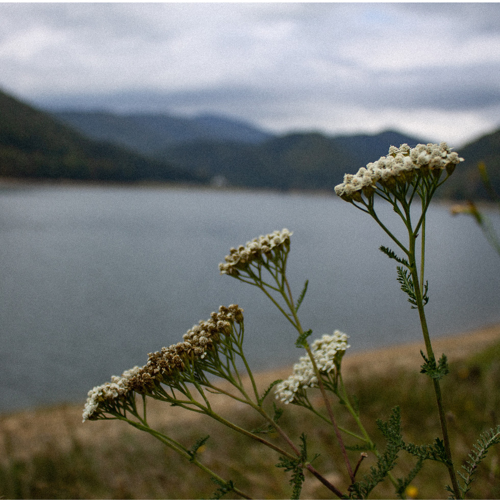 Lake Vidraru.jpg