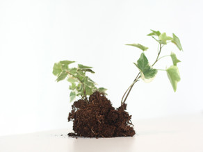 Looking to grow? Try Stakeholder Capitalism