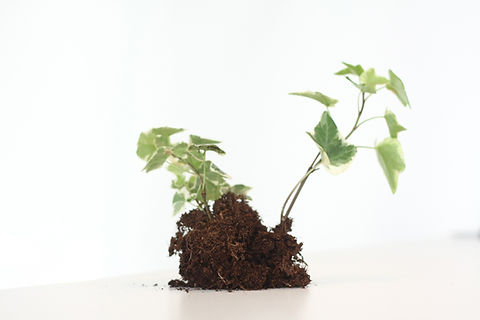 成長する植物