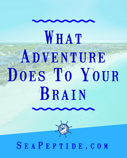 What Adventure Does to Our Brain