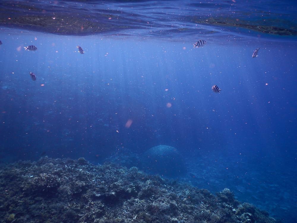 幻の島と呼ばれるバラス島