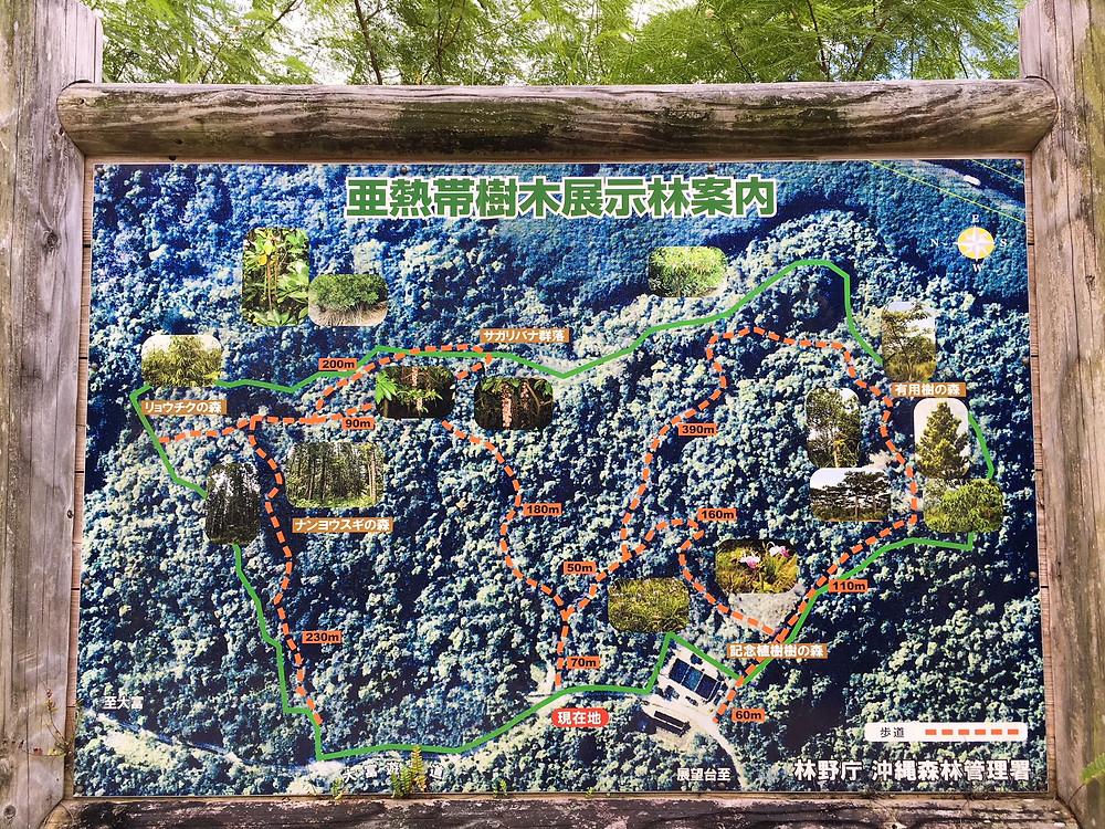 亜熱帯樹木展示林