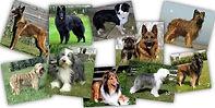 Perros de las razas del grupo uno
