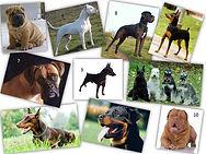 Perros de las razas del grupo dos