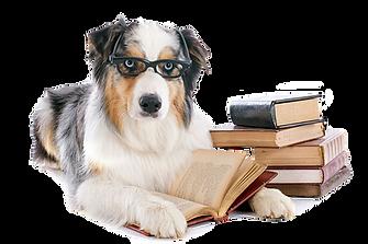 Cursos y exámenes kcu