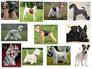 Perros de las razas del grupo tres